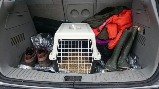 A cat box has many purposes other than just transporting cats.
